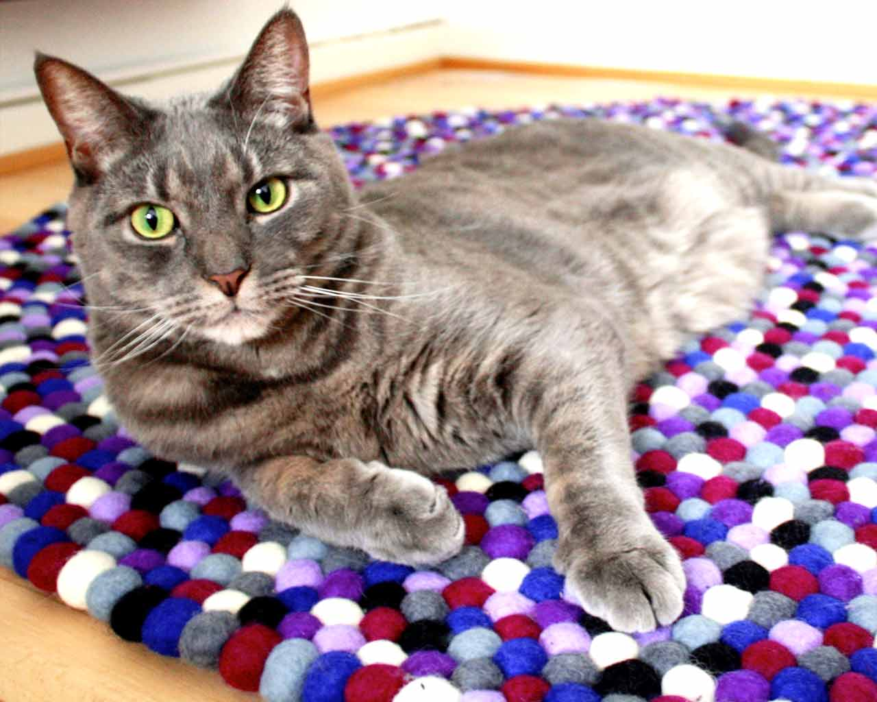 grey cat camera purple felt balls carpet